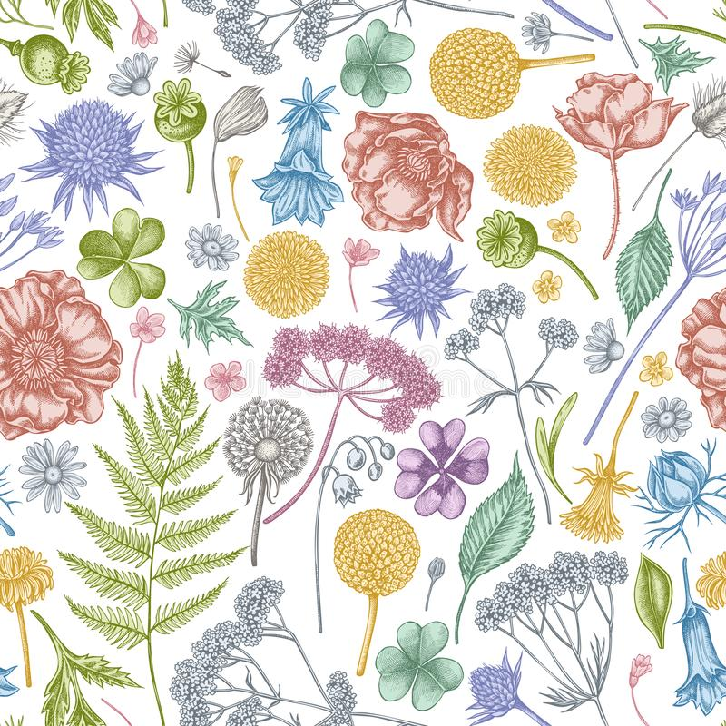 Free Seamless Pattern With Hand Drawn Pastel Shepherd`s Purse, Heather, Fern, Wild Garlic, Clover, Globethistle, Gentiana Stock Photo - 163637340