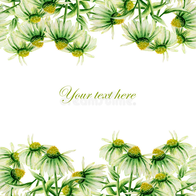 Seamless postcard, frame border with green camomiles painted in watercolor on a white background stock illustration