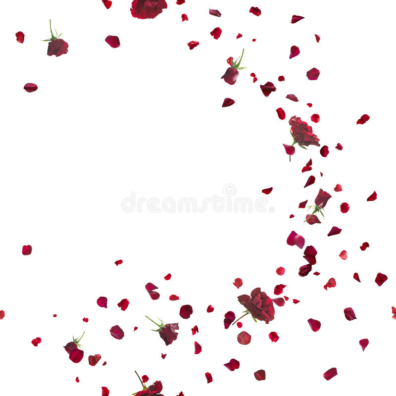 Free Seamless Red Roses Breeze On White Stock Image - 53839901