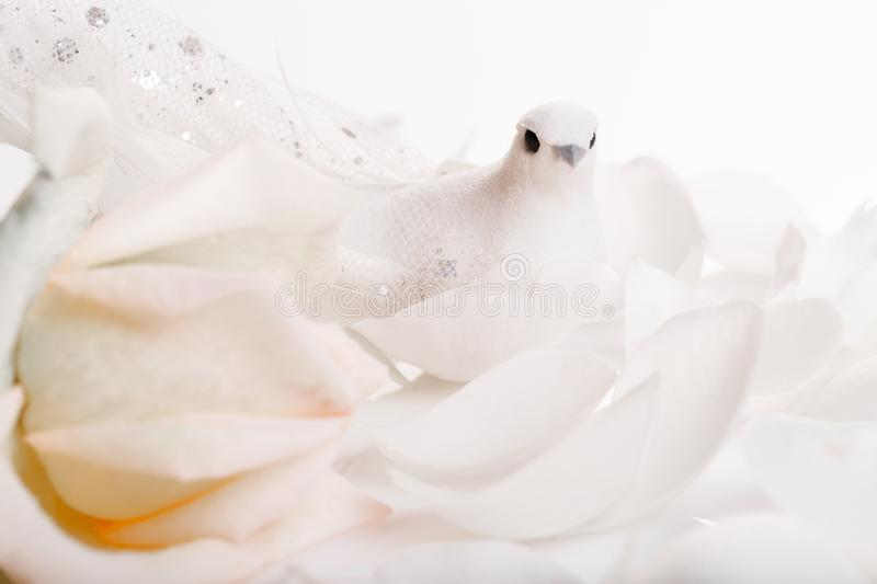 Seamless romantic background. Wedding, valentine, engagement, anniversary theme. Romantic wedding background. White dove and white rose, a symbol of peace and royalty free stock photo