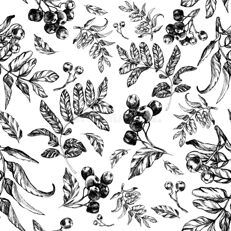 Seamless rowan pattern with rowan leaves. And berries  be  for textile printing or background, wallpaper, ad, banner  can used royalty free illustration