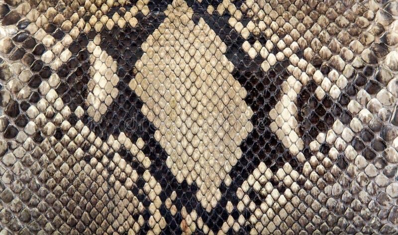 Seamless snake skin texture. Fashion for tropical reptiles. Genuine Python skin. Black grey background royalty free stock photo