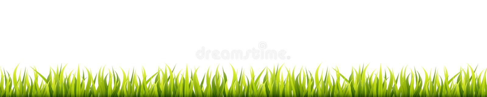Seamless summer grass panorama. Green springtime herbal lawn. Field or meadow horizontal decoration lines royalty free illustration