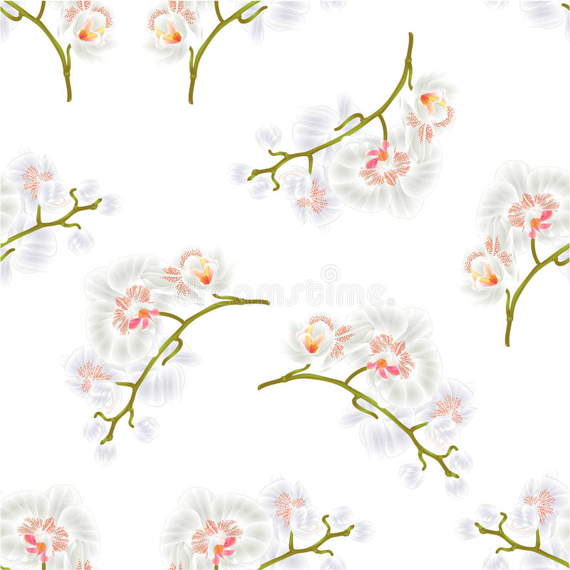 Seamless texture Branches orchids Phalaenopsis White flowers tropical plants green stem and buds vintage vector. Botanical illustration hand draw vector illustration