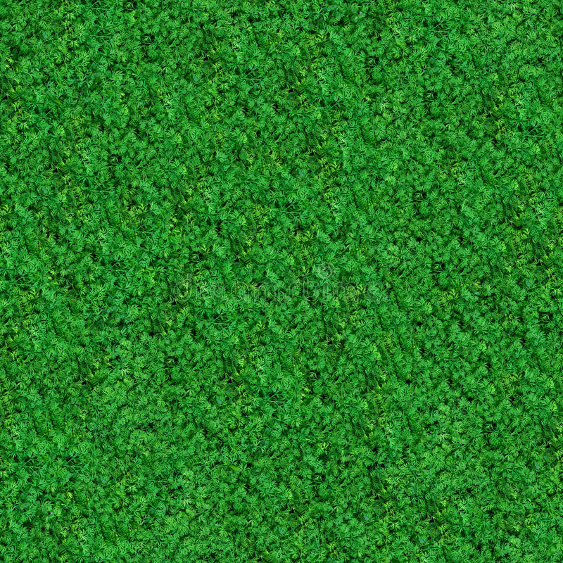 Download Seamless Texture. Green Meadow Grass. Stock Image - Image of field, environment: 30614981