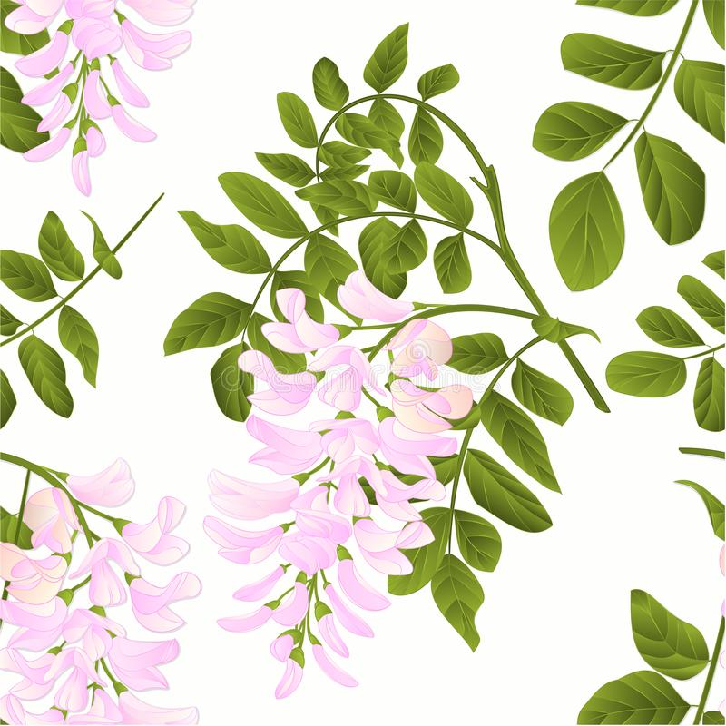 Seamless texture Locust tree twig with leaves and flowers vintage vector illustration editabe. Hand draw royalty free illustration
