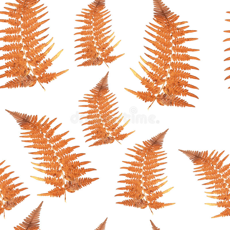 Free Seamless Texture - Orange Fern Leaf Stock Photography - 75576842