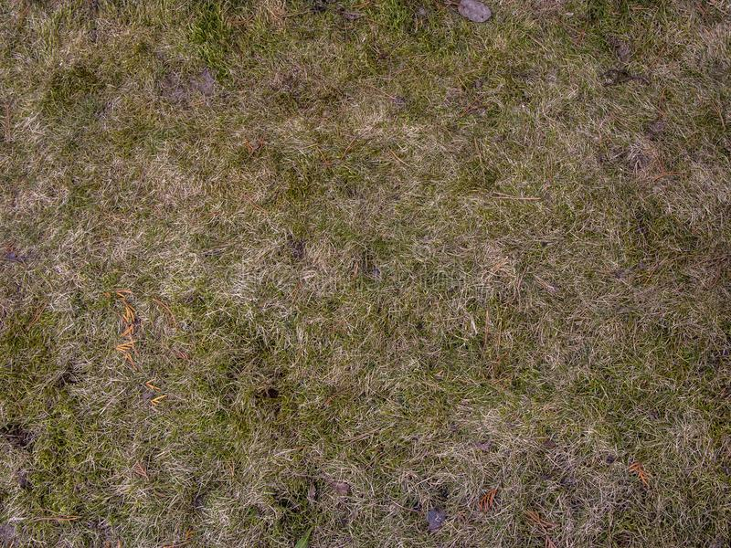 Soil with dried grass background. Seamless Texture of the Ground with Dry Herbs. stock photo