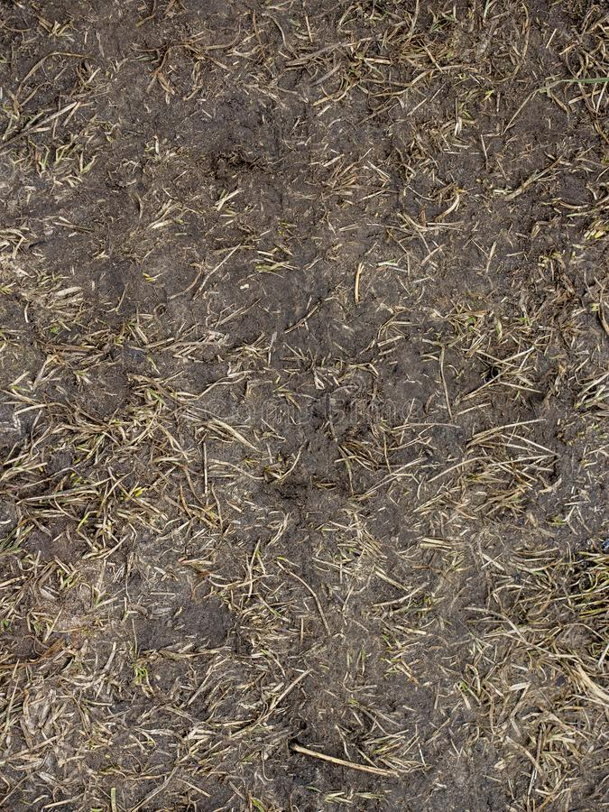 Black Soil with dried grass backgSeamless Texture of the Ground with Dry Herbs. royalty free stock images