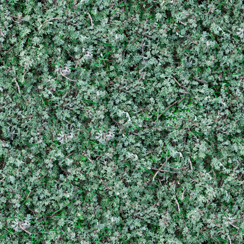 Download Seamless Texture Of Sage-Brush. Stock Illustration - Illustration of fence, aroma: 30272719