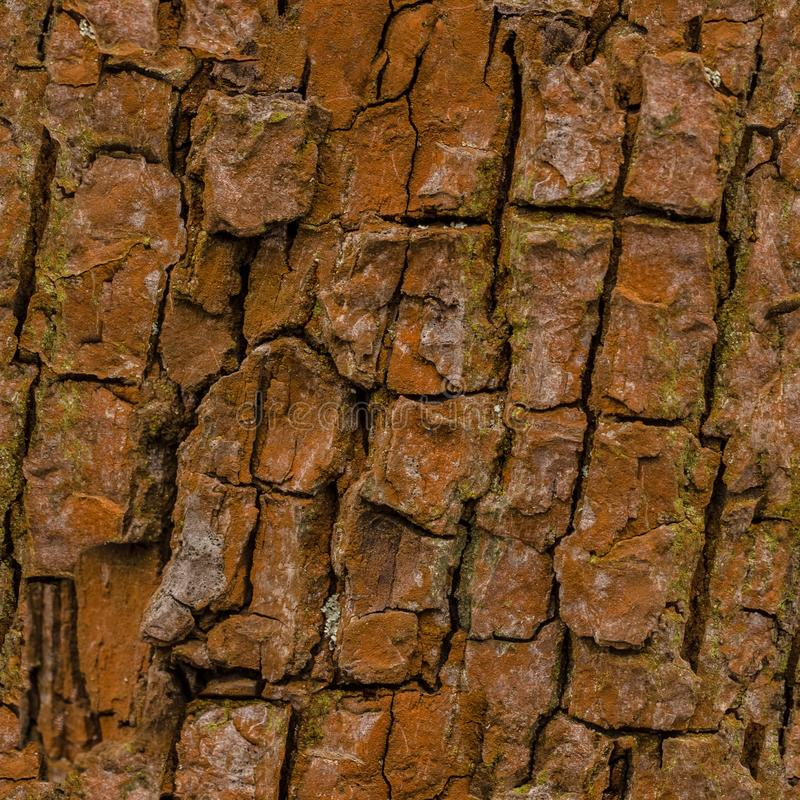 Seamless tree bark background. Brown tileable texture of the old tree. Mossy bark of an old oak tree, forming a beautiful pattern. Ideal for hunting and stock photography