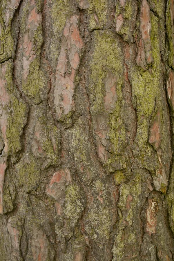 Seamless tree bark background. Brown tileable texture of the old tree royalty free stock photos