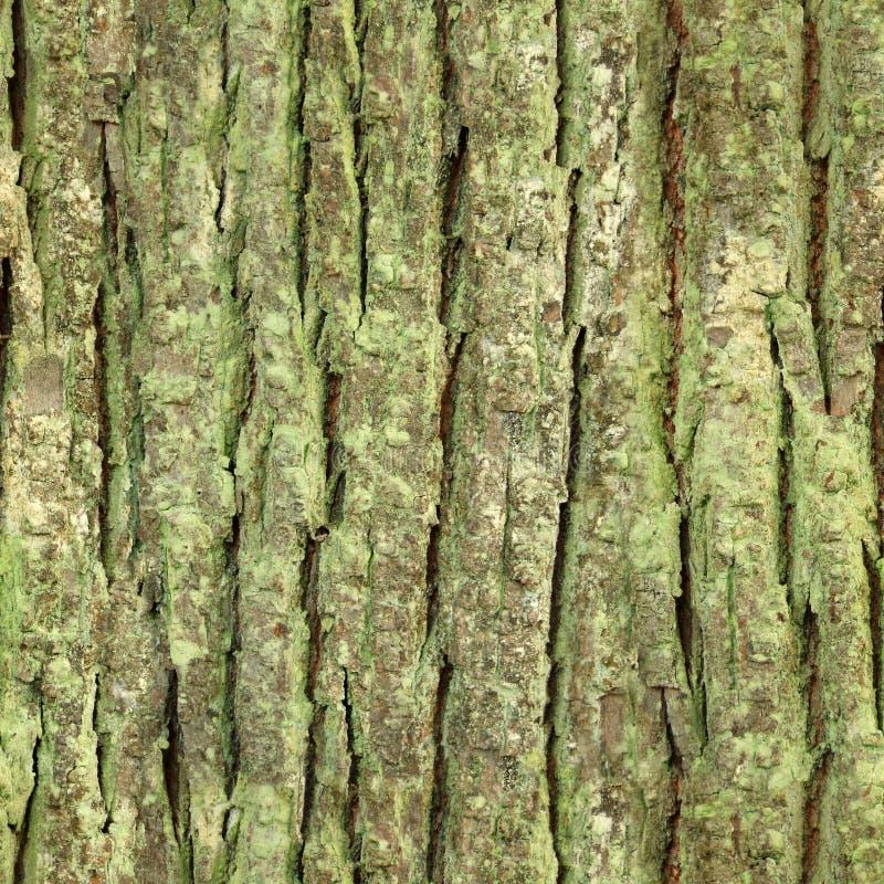Seamless tree bark, rind texture royalty free stock photo