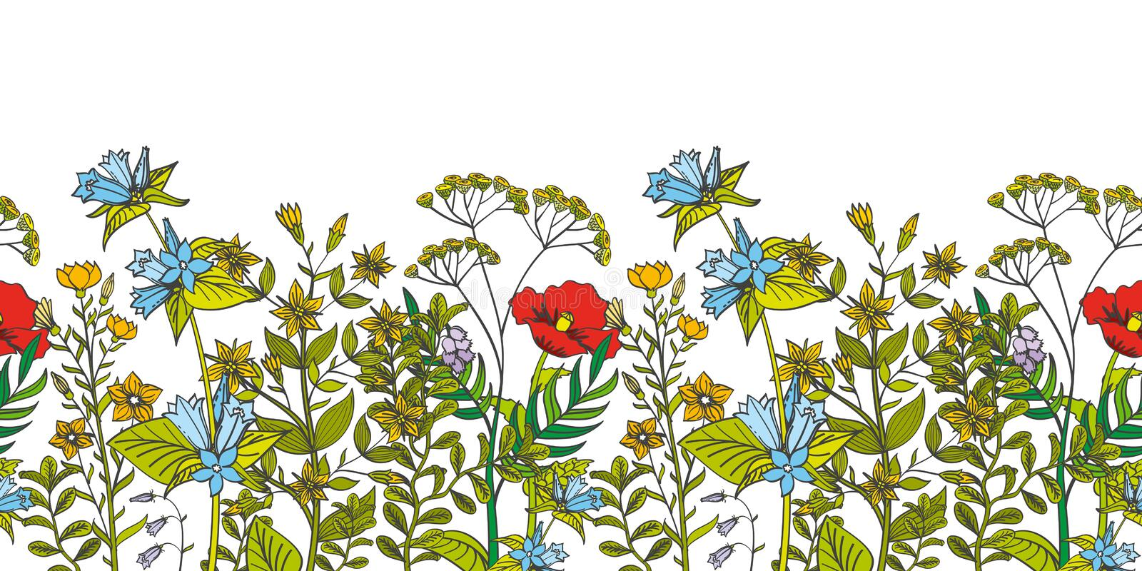 Seamless vector floral border with colored herbs and wild flowers vector illustration