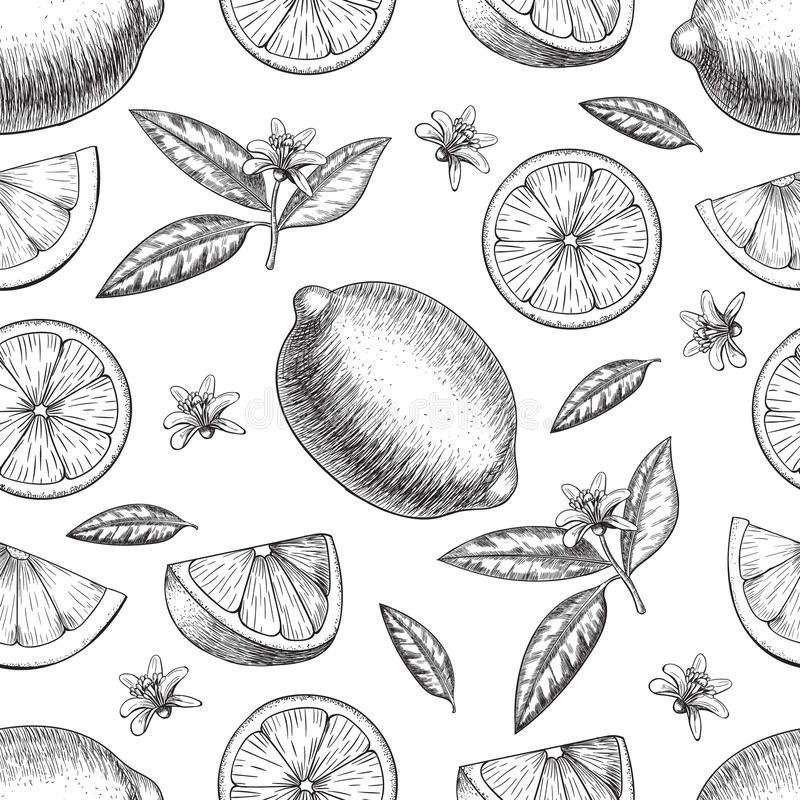 Seamless Vector hand drawn lime or lemon. Whole , sliced pieces half, leave sketch. Fruit engraved style illustration. Seamless Vector hand drawn lime or lemon royalty free illustration
