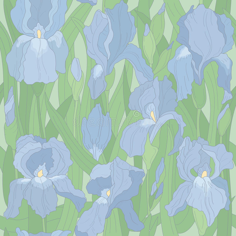 Seamless vector pattern with irises royalty free illustration