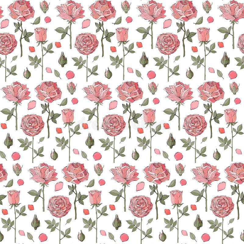 Seamless vector pattern pink roses, flowers, buds and green leaves on white background. Hand drawn vintage style. Good design for. Printing, greeting card vector illustration