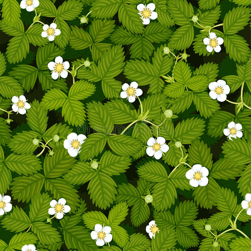 Seamless vector texture of spring strawberry meadow with white flowers and green leaves, top view stock images