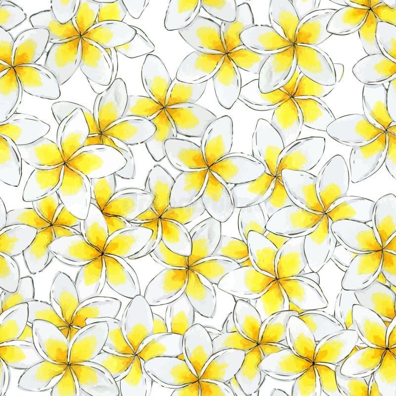 Seamless watercolor flower pattern. Plumeria floral pattern. royalty free illustration