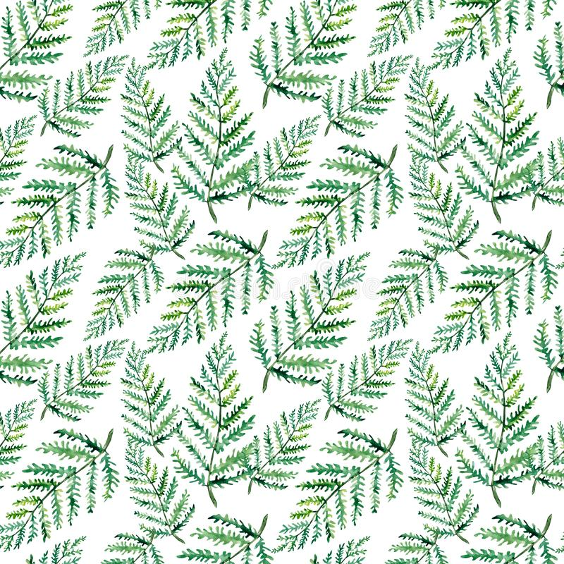 Seamless watercolor Greenery Pattern. Fern Leaves and Branches Print. Summer, Spring Forest Herbs, Plants Texture vector illustration