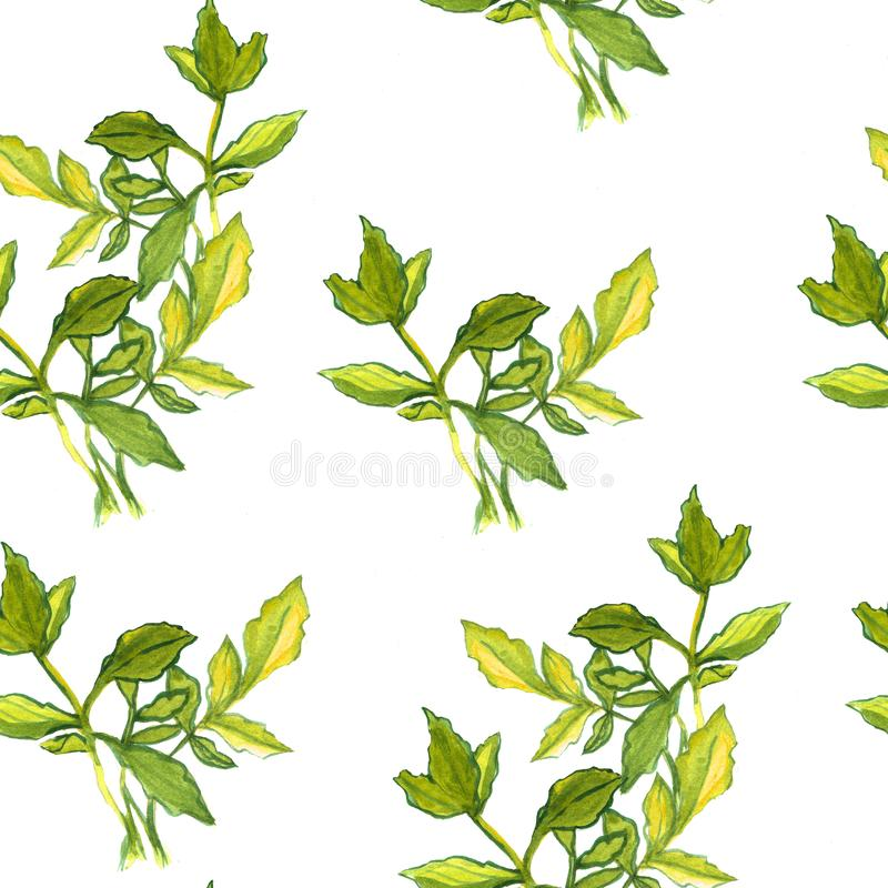 Seamless watercolor pattern with green leaves. Botanical texture. Floral elements vector illustration