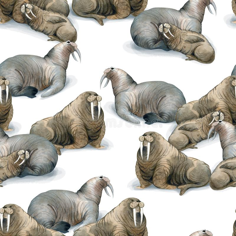 Seamless watercolor pattern about north fauna. Ice and sea animal. Herd of brown warluses lies on snow. Background stock illustration