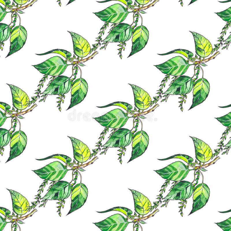 Seamless pattern with poplar green leaves on white background stock illustration