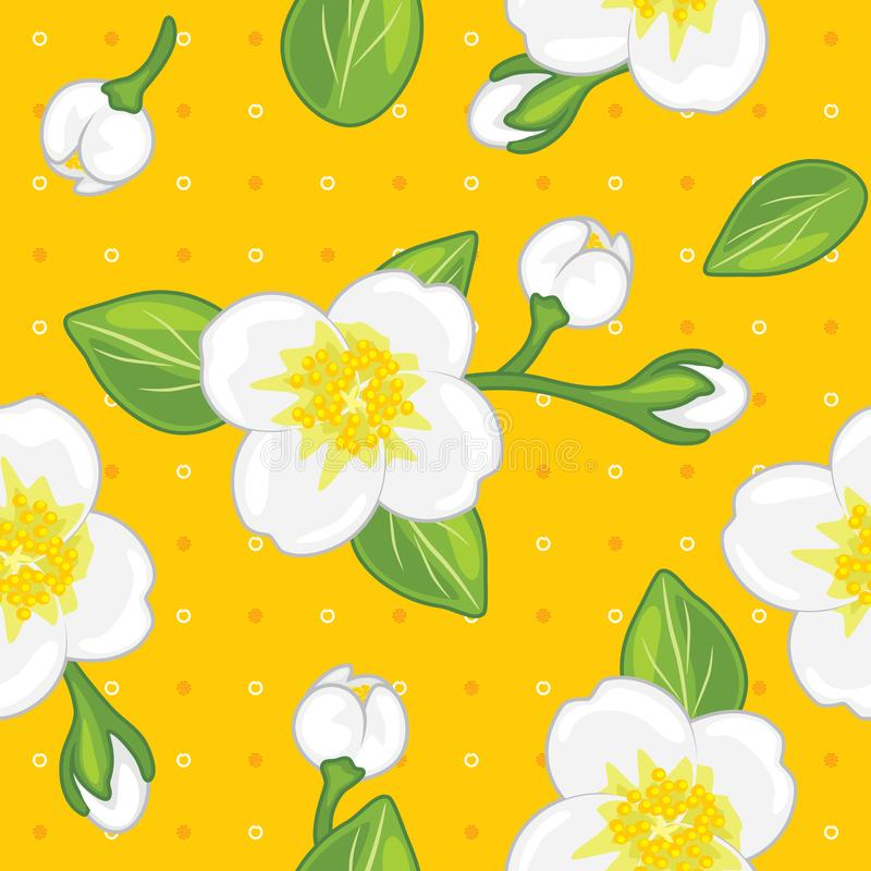 Seamless yellow pattern with blooming jasmine stock images