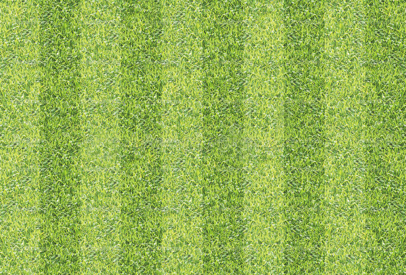 download seamlessly green grass texture background stock photo image of seamlessly field seamless grass texture game a76 grass