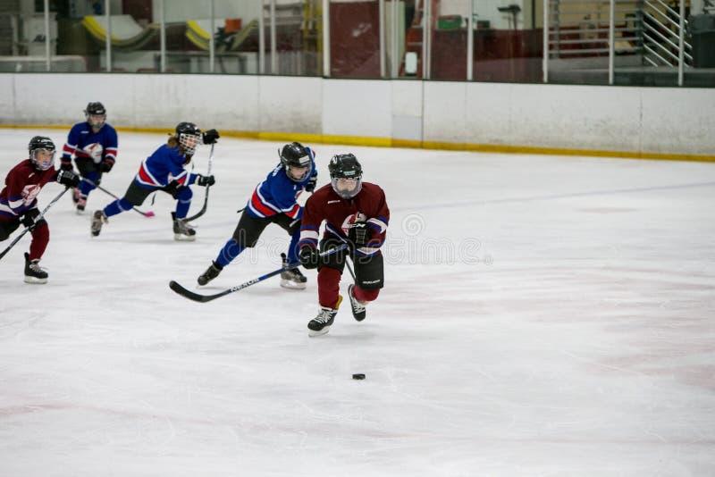 20161204 134746 Sean_fall_hockey_game 9127 Dominio Pubblico Gratuito Cc0 Immagine