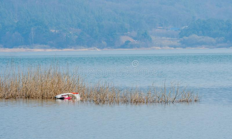 Seaplane laying upside down in river. Small single passenger seaplane laying upside down on river sandbar covered with reeds with river and shoreline in royalty free stock image