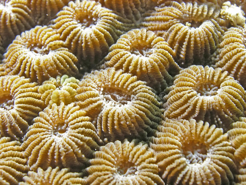 Seaplant lizenzfreie stockfotos