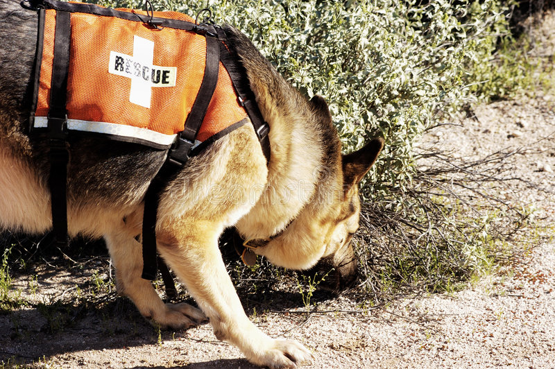 Download Search Dog stock photo. Image of arizona, lost, dogs, scent - 347722