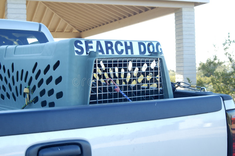 Search Dog stock image