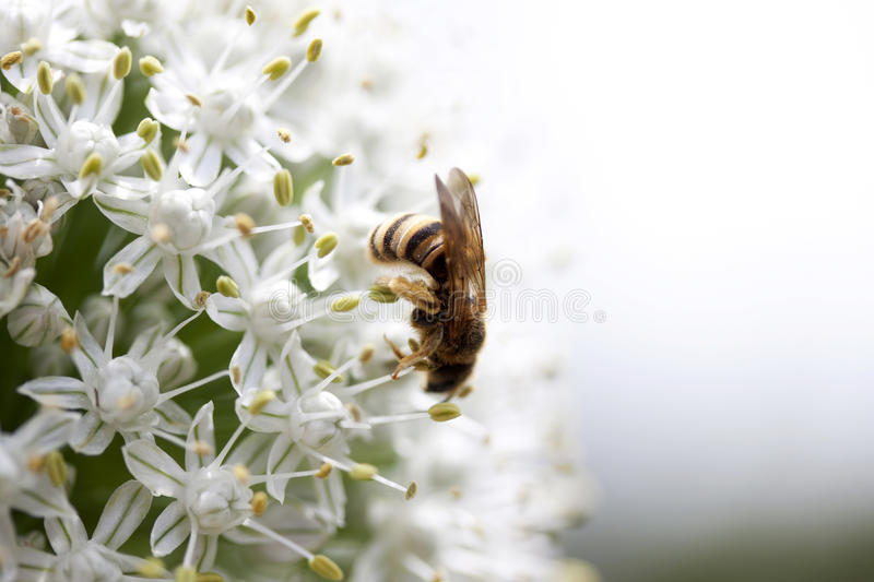 Download In Search Of The Flower Pollen Royalty Free Stock Image - Image: 21927136