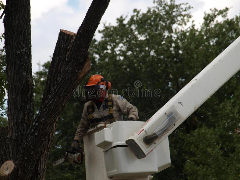 Search and Removal of Trees Widow Makers. Park workers are now searching and removing widow makers left hanging in trees after the severe summer storm that took stock images