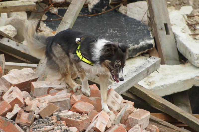 Search & rescue disaster zone. Search & rescue fire-fighters at building collapse stock images