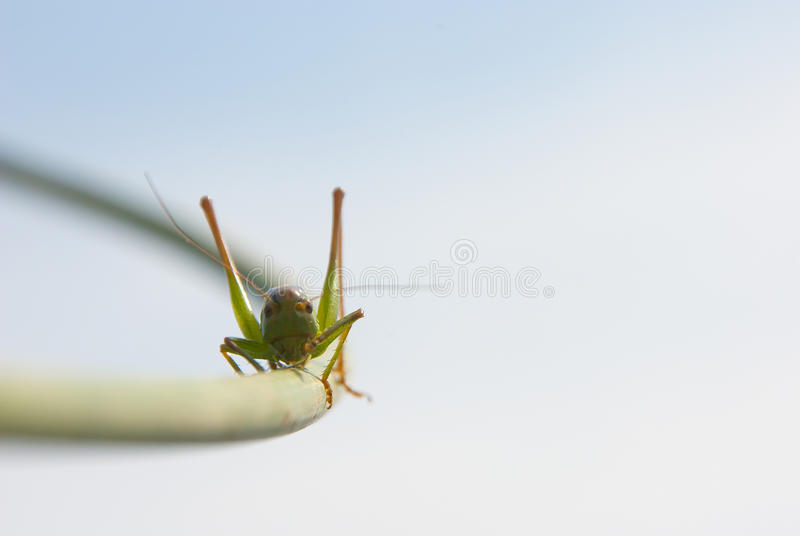 Download In Search Of The Top  Point Stock Photo - Image: 16064428
