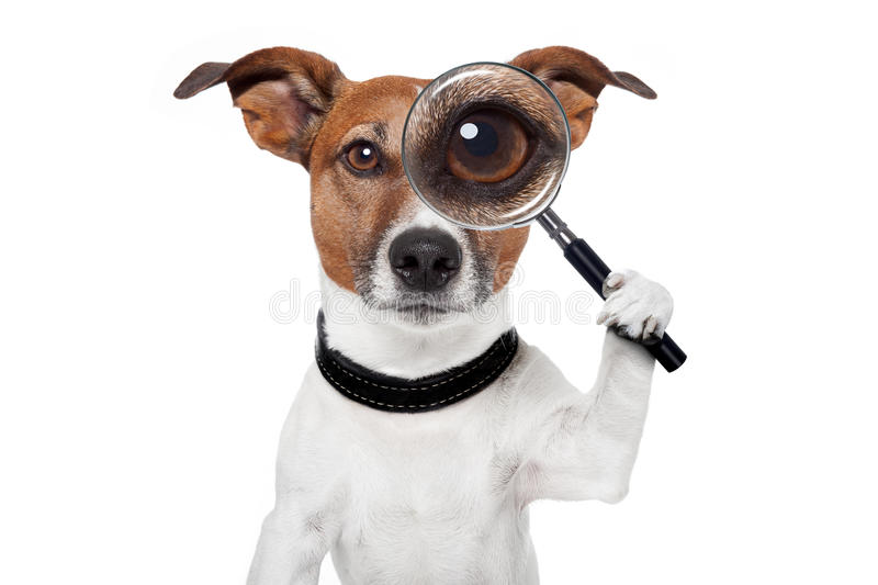 Searching dog with magnifying glass royalty free stock image