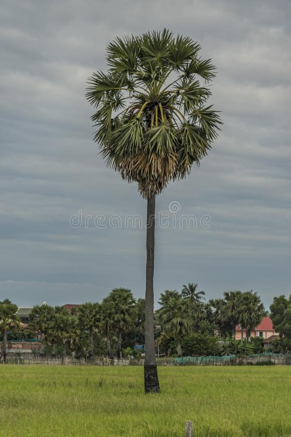 Seas and flora near Siem Reap city. In January evening stock images