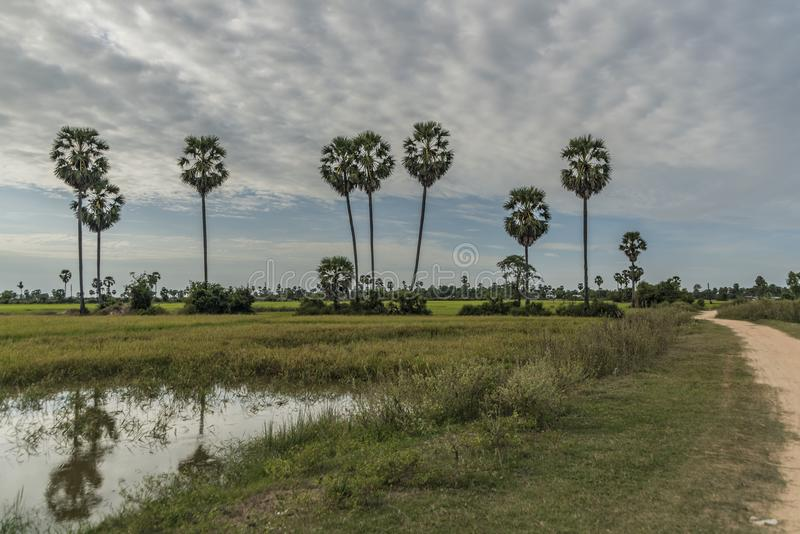 Seas and flora near Siem Reap city. In January evening stock photography