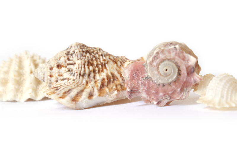 Seas Shells Row. Sea Shells lined up in a row for various design elements stock image