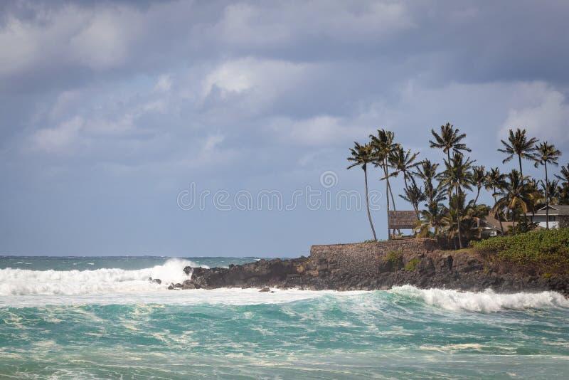 Seascape залива Waimea с пальмами стоковые изображения rf