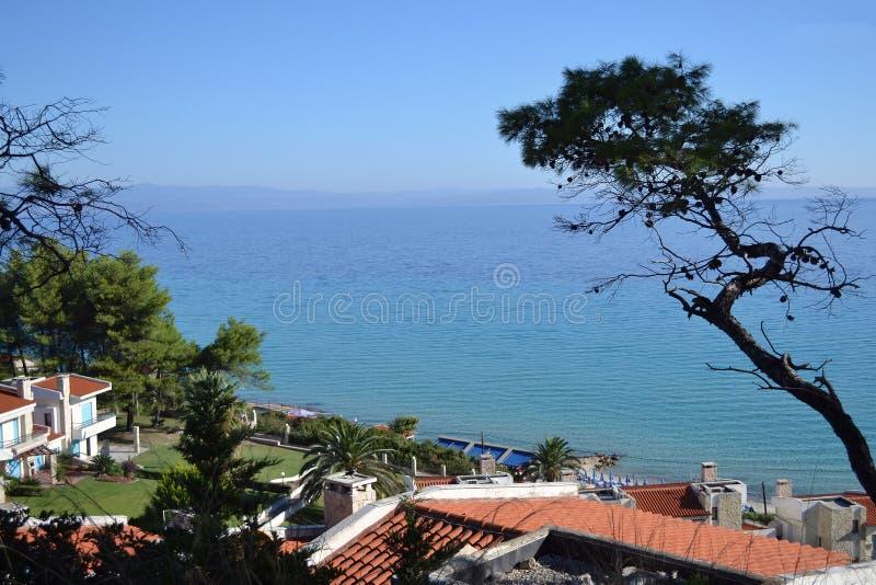 Seascape Ελλάδα, Kassandra, Halkidiki Μπλε ουρανός και η θάλασσα, καμμμένο παλαιό πεύκο στοκ εικόνα