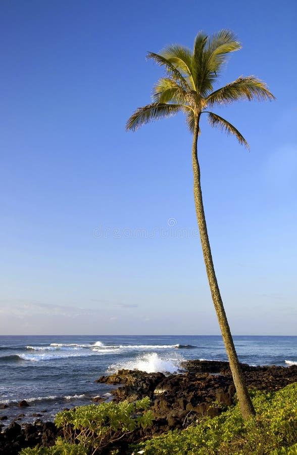 Seascape Гаваи стоковое изображение rf