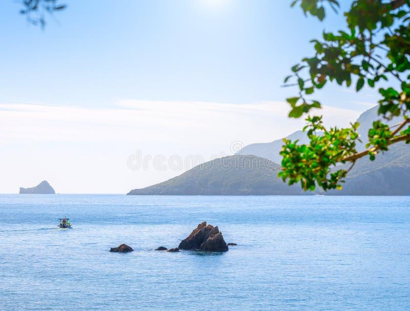 Seascape красивого лета панорамный Взгляд залива моря с кристально ясной лазурной водой Ветви старого оливкового дерева внутри стоковое фото