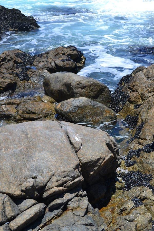 Seascape национального парка западного побережья стоковые фотографии rf