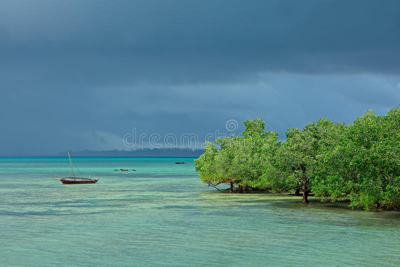 Seascape с деревьями мангровы стоковые изображения rf