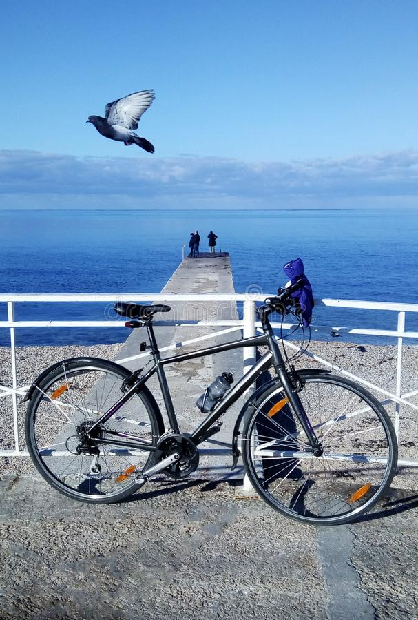 Seascape with a bicycle and flying bird royalty free stock image