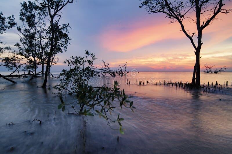 Seascape bonito, árvore dos manguezais da silhueta sobre o sunse impressionante imagem de stock royalty free